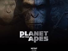 Planet Of The Apes от Netent: популярный автомат
